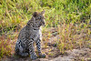 Leopard_Cubs_MalaMala_2019_South_Africa_0036