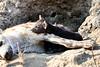 Hyena_Cub_MalaMala_2019_South_Africa_0008