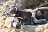 Hyena_Cub_MalaMala_2019_South_Africa_0015