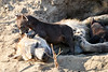 Hyena_Cub_MalaMala_2019_South_Africa_0017