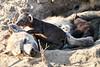 Hyena_Cub_MalaMala_2019_South_Africa_0014