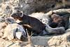 Hyena_Cub_MalaMala_2019_South_Africa_0013