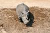 White_Rhino_MalaMala_2019_South_Africa_0016