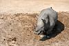 White_Rhino_MalaMala_2019_South_Africa_0020