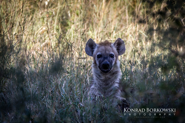 south_africa-33