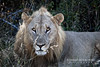 south_africa-39