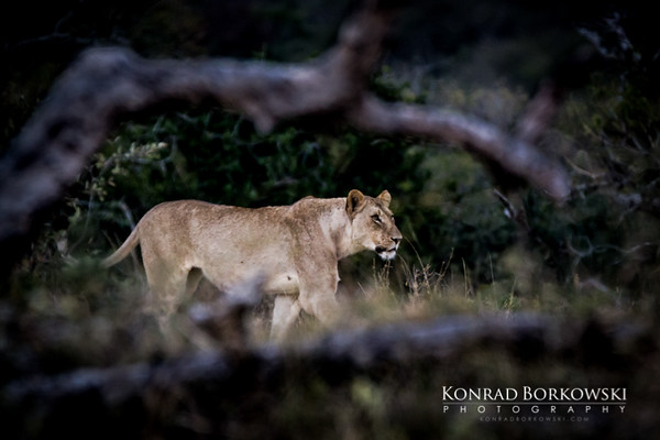 south_africa-37