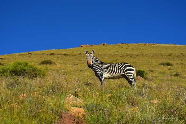 Ch 1 Addo Elephant and Mountain Zebra National Parks