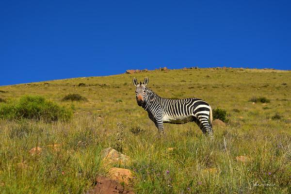 Ch 1 Addo Elephant and Mountain Zebra National Parks