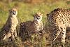 Cheetah_Adventure_Phinda_2016_0035