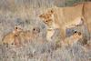 Lion_Cubs_Tswalu_2016_0043