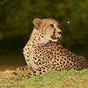 Watching - Greater Kruger by Tracey Jennings