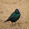 Evil Bird .....
