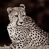 Solitude - Greater Kruger by Tracey Jennings