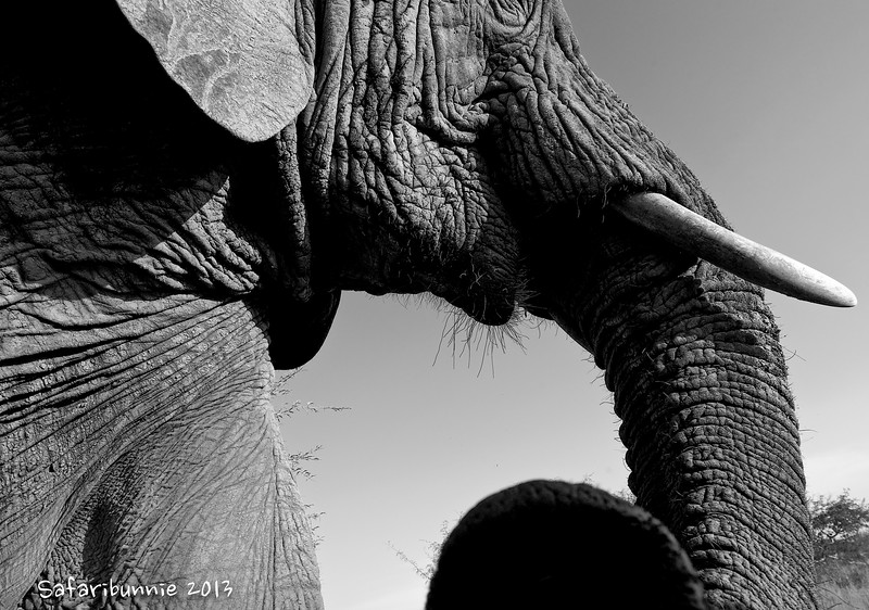 Too close - Greater Kruger by Tracey Jennings