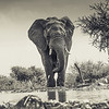 Elephant - Madwike by Tracey Jennings