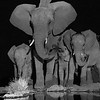 Elephants by the Waterhole - Madwike by Tracey Jennings