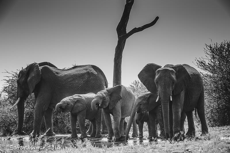 Elephant Family - Madwike by Tracey Jennings