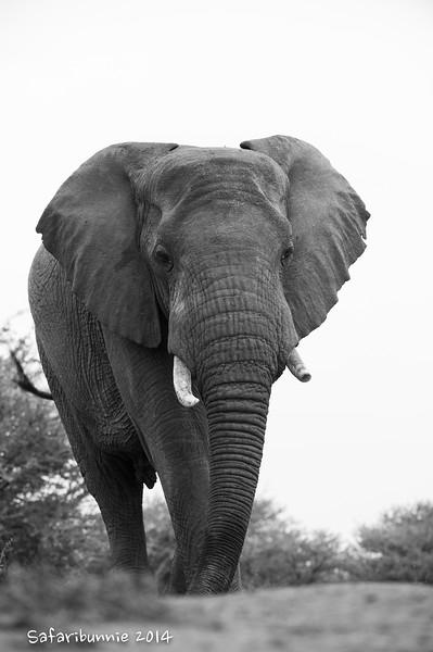Curious elephant - Madwike by Tracey Jennings