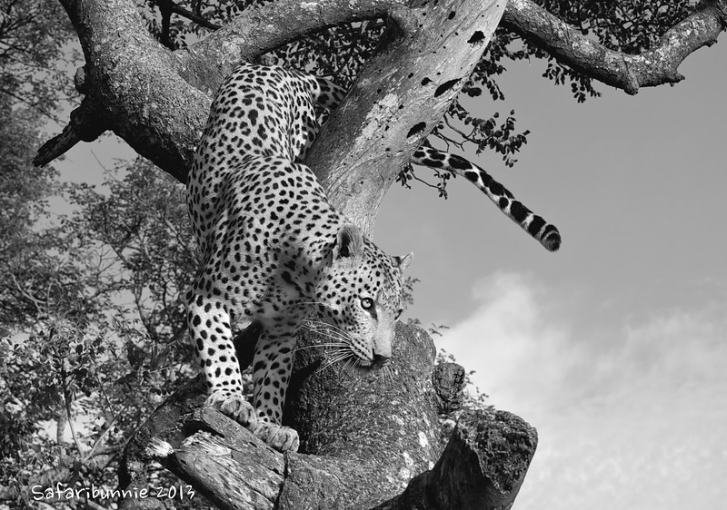 On the way down - Greater Kruger by Tracey Jennings