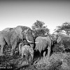 Elephant family - Greater Kruger by Tracey Jennings