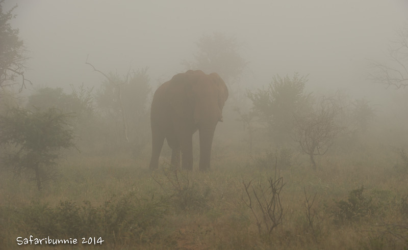 Elephant in morning mist - Madwike by Tracey Jennings