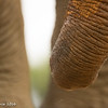 Elephant's trunk - Madwike by Tracey Jennings