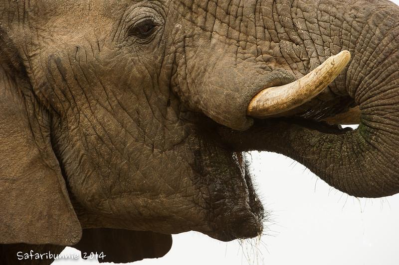 Kind elephant eyes - Madwike by Tracey Jennings