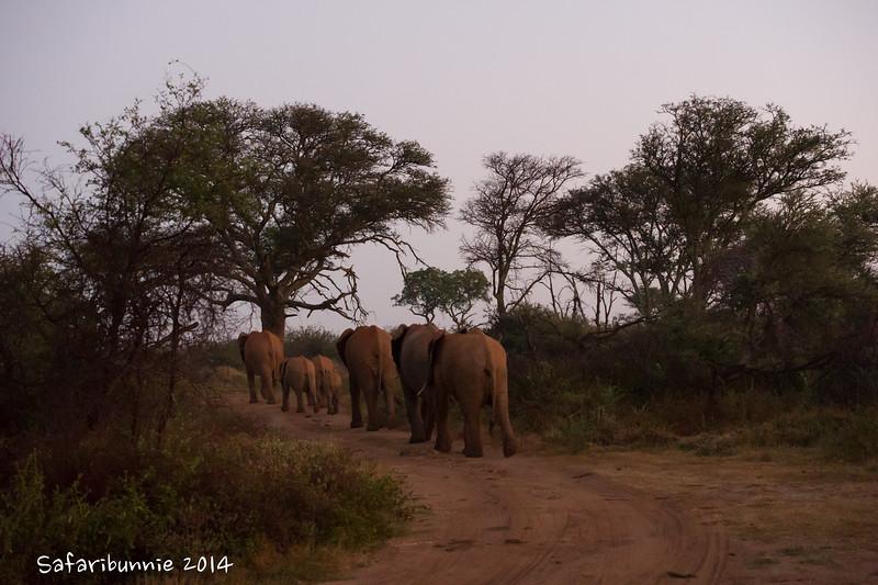 Elephant train - Madwike by Tracey Jennings