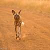 Hurrying up - Madwike by Tracey Jennings