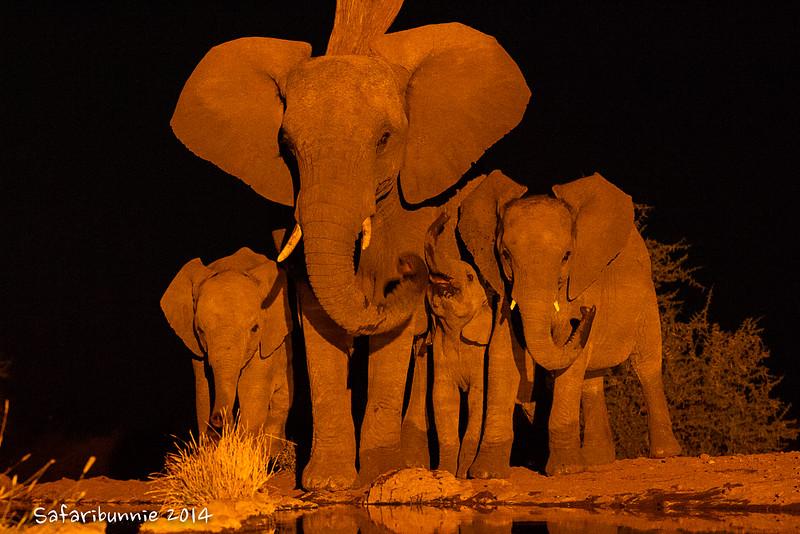 Elephants by the Waterhole - Madwike by Tracey Jennings