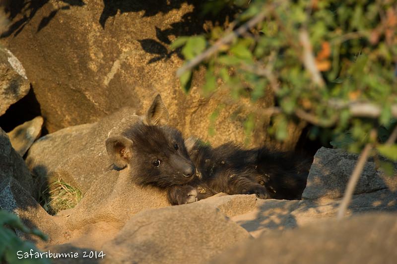 Baby brown hyena - Madwike by Tracey Jennings