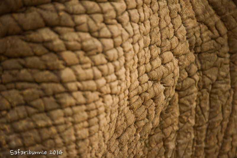 Texture - Madwike by Tracey Jennings