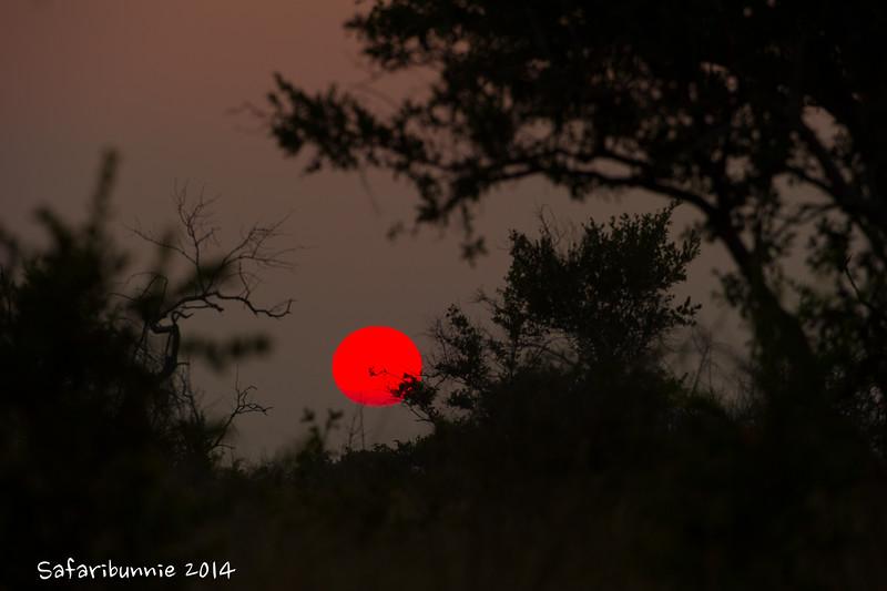 Sunrise - Madwike by Tracey Jennings