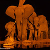 Evening drinks with the elephant family - Madwike by Tracey Jennings
