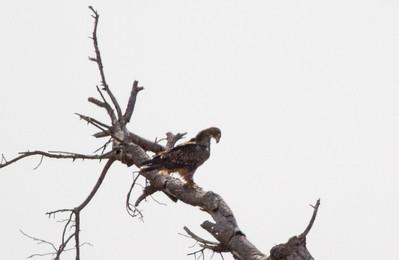Birdlife - Kruger