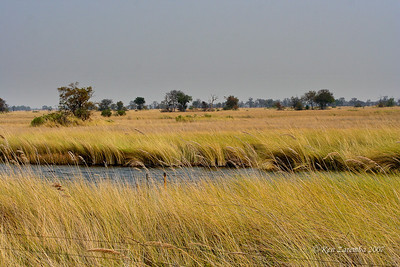 View looking out over the Okavango Delta and Moremi Game Reserve from our the elevated porch of our tented camp site