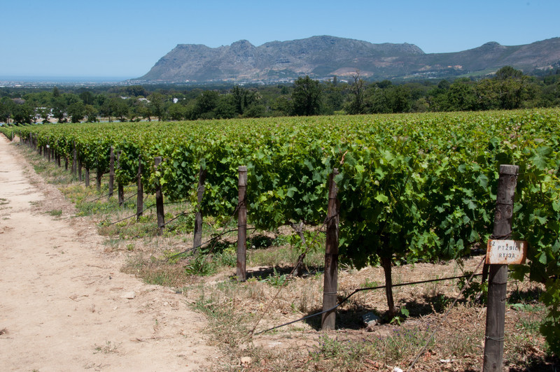 Groot Constantia Vineyard in front of Jonkershuis restaurant