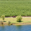 Cruising Through the Vineyard