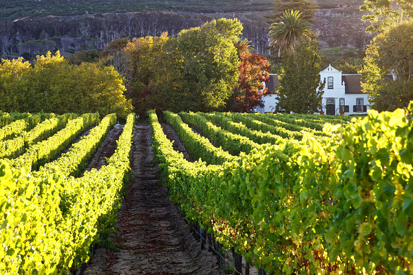 Buitenverwachting Wine Farm in Constatntia, Cape Town