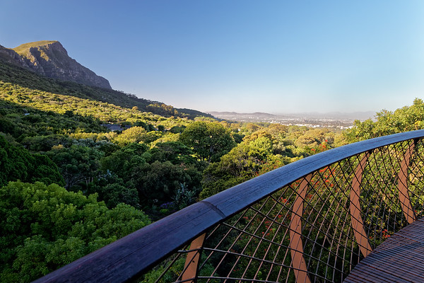 View of Kirstenbosch Botanical Gardens from the Boomslang canopy walkway