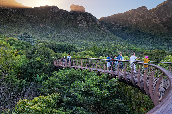 View of Kirstenbosch Botanical Gardens and arboretum from the Boomslang canopy walkway