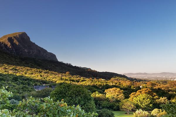 Kirstenbosch Botanical Gardens arboretum and Devils Peak, Cape Town