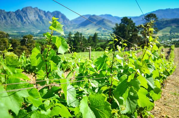 Wine estates of Franschhoek