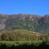 Constantia Berg looming over thev vineyard of Groot Constnatia winery.