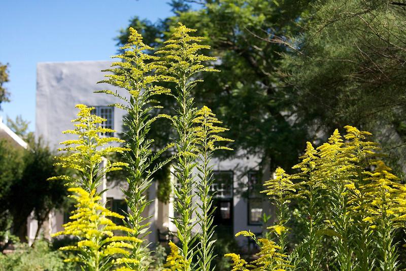The 19th century gardens behind the Grosvenor home in Stellenbosch, part of the Stellenbosch Village Museum.