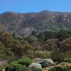 The hillsides surround Groote Constantia.