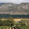 Vineyards of the Groot Constantia Winery