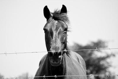 The stare of the mare