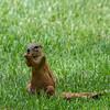 Squirrel being a squirrel